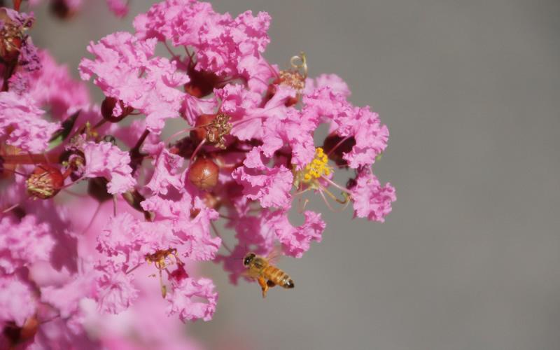 160825_flowerbee082__