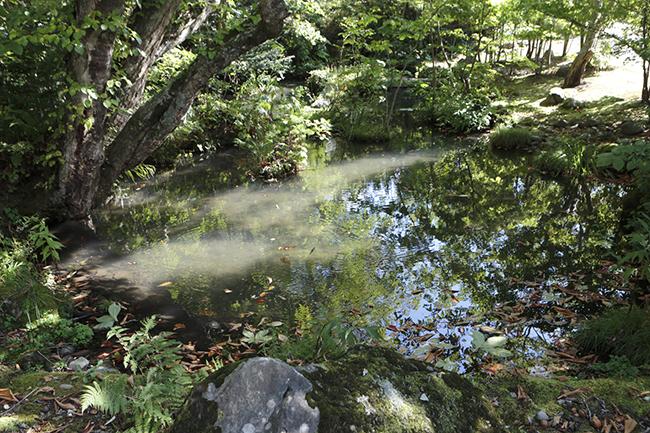 石畳から池をのぞくと、いまにもジブリのコダマ(木霊)が出てきそうだった