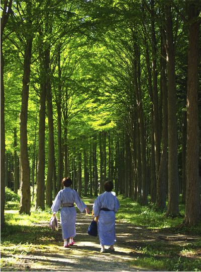 カツラ並木を歩きながら、森林を浴びる(撮影:矢島あづさ)