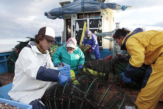 船上でホタテの稚貝を籠に入れる作業