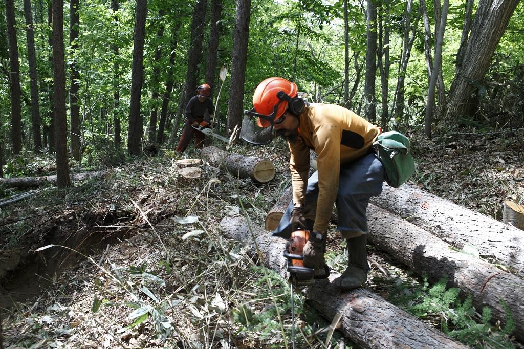 チェーンソーを自在に操る陣内さんは、以前下川町森林組合に勤務していたこともあり、その後「NPO法人もりねっと北海道」を設立し多彩な活動を行ってきた。2015年からはフリーの木こり・森の空間づくりをメインの仕事としながら、音楽家としてライブ活動も行う